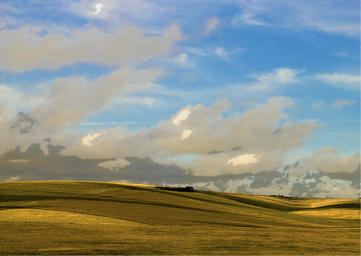 Sussex Downs No9