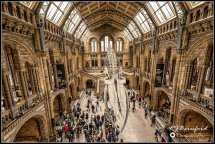 Hintze Hall, Natural History Museum, London
