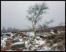In Winters Grip