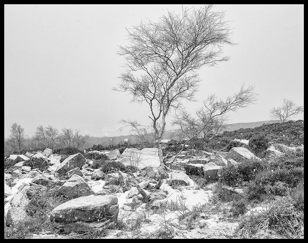 In Winters Grip B&W