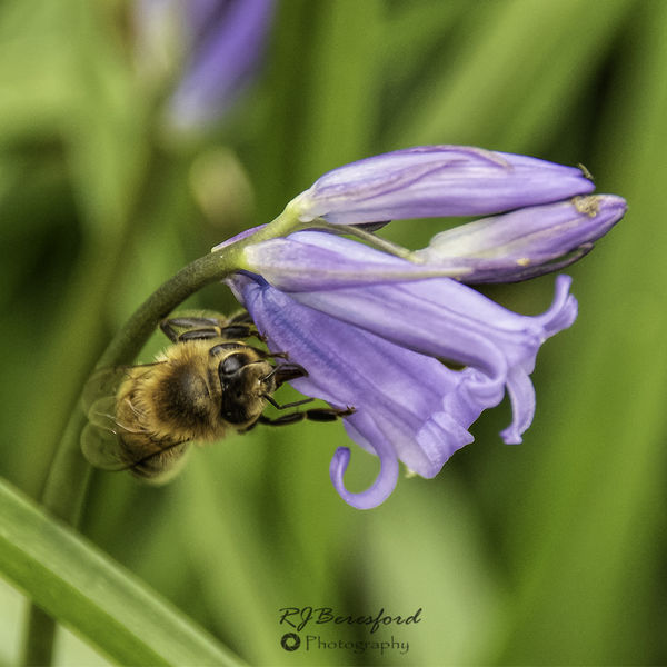 Looking for Nectar