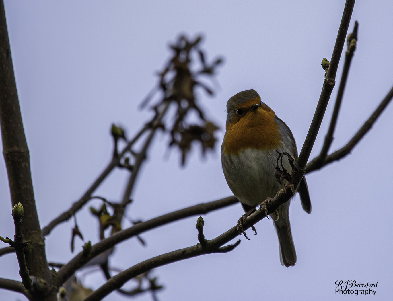 Robin Stare