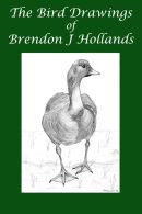 The Wildlife Drawings of Brendon J Hollands