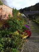 Herbaceous border summer