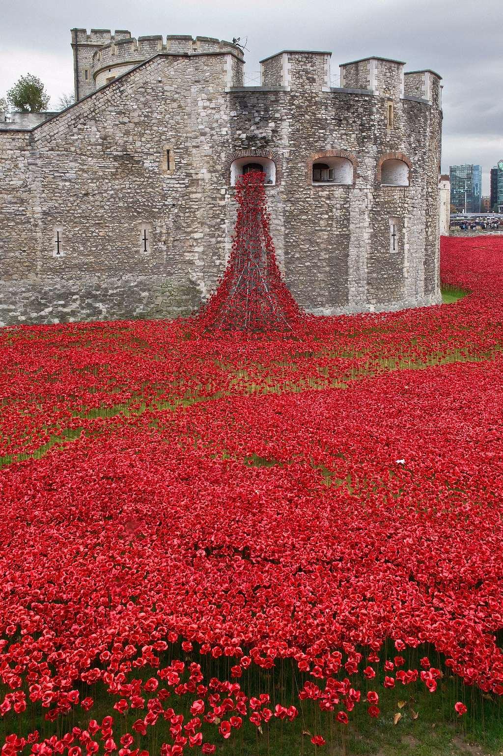 Tower Poppys 2