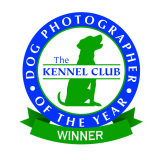 2nd Place Winner . Working Dogs category.