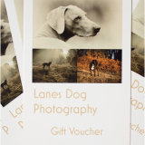 Book your session! GIFT VOUCHERS available!