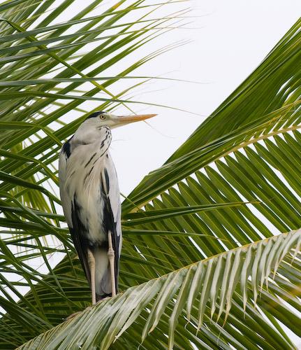 Thudufushi sentinal