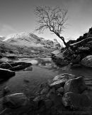 'The' Glencoe Tree