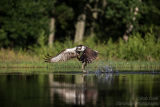 Rothiemurchus Ospreys 24