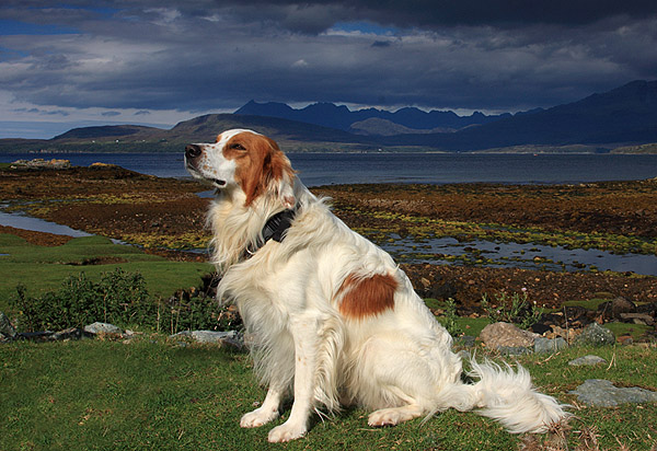 Dog on Skye