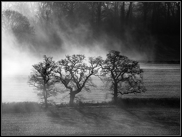 Three in the mist