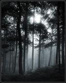 Mist, light, trees