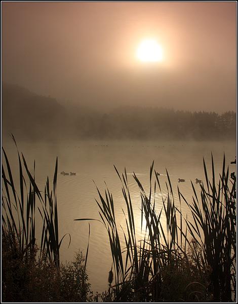 Trimpley mist