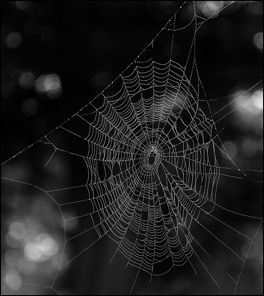 Wyre forest web