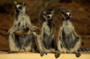 Madagascar Photography Tour <br> 17 August - 5 Sept 2020