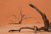 Dead tree, Namib Desert