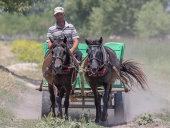 Horse and cart, Letea