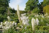White Garden, Sissinghurst