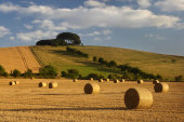 Harvest, Liddington Hill