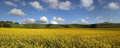 Cherhill Down panorama