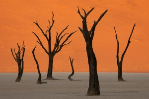 Deserts of Namibia<br>16 August to 4 September 2021<br> 11 July to 30 July 2022
