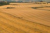 Harvest patterns, Vale of Pewsey