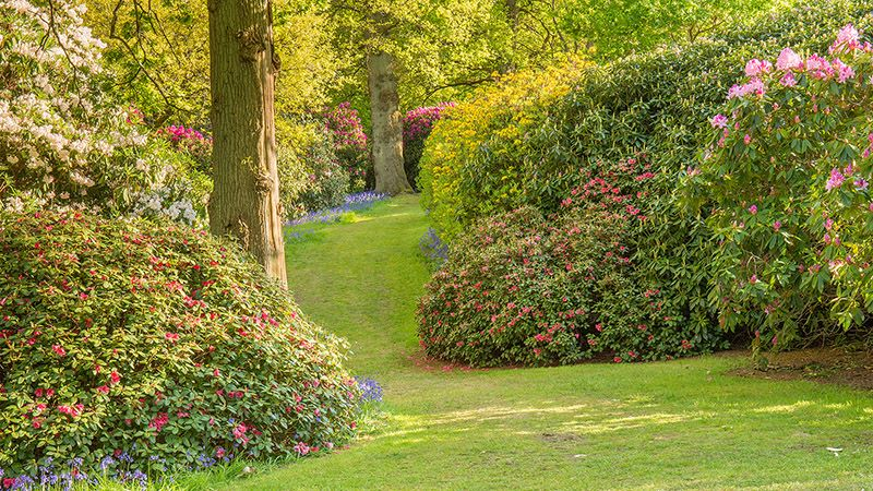 Bowood Woodland Garden