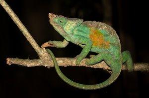 Madagascar Photography Tour