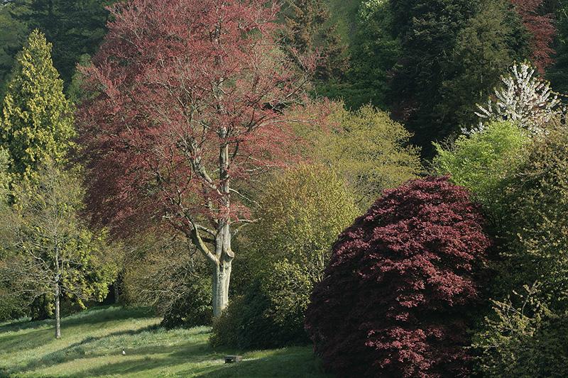 Stourhead in Spring