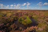 Rosedale Moor