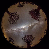 Quiver Trees and Milky Way, Quiver Tree Forest