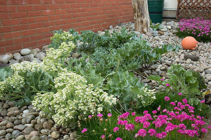 Shingle garden