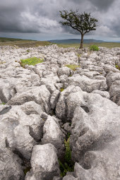 Conistone Limestone pavement