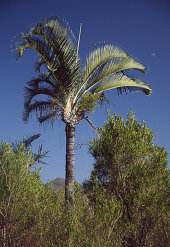 Triangulated palm