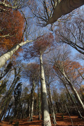 Beech wood, Rack Hill