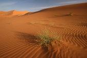 Sahara Sand dunes