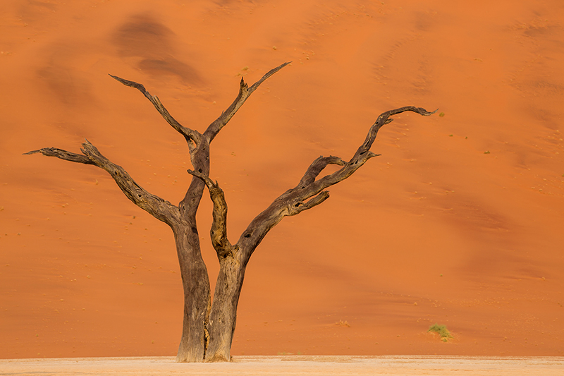 Ghost Tree, Dead Vlei