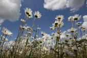 British Wild Flowers & Fungi