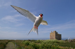 Northumberland Seabirds and Castles