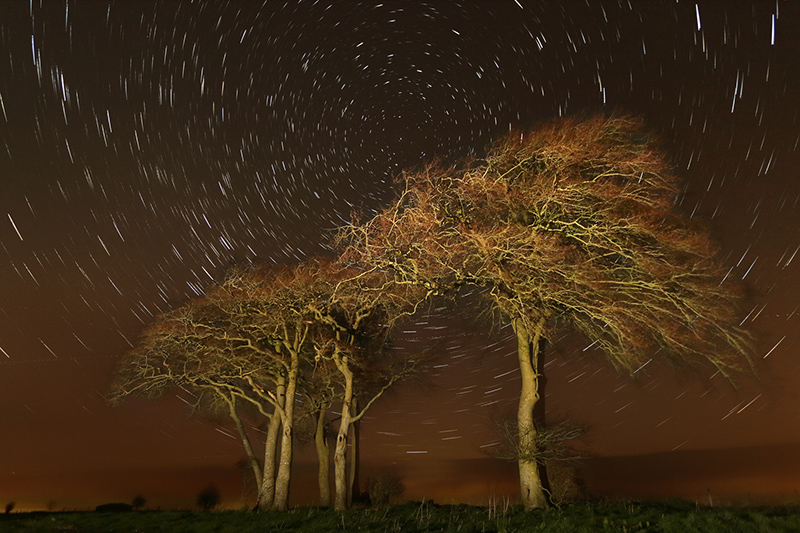 Beech Clump and Star Trails