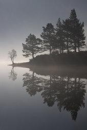 Scots Pines, Glen Affric