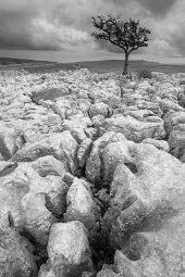 Conistone Limestone pavement
