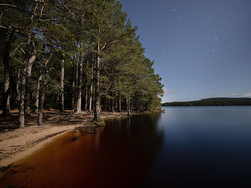 Caledonian Pine Forest by moonlight