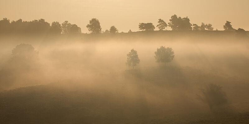 Mist on Rockford Common