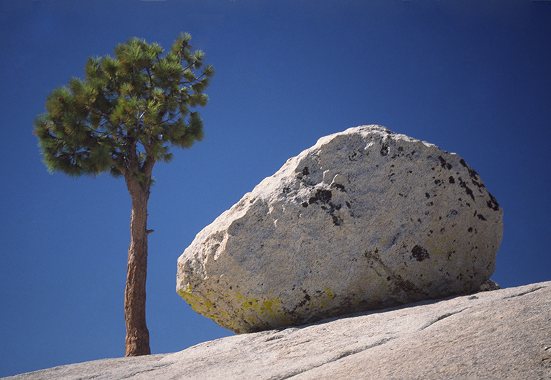Pine tree and granite boulder