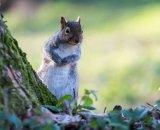 Cutie Squirrel