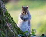 Cutie squirrel 2