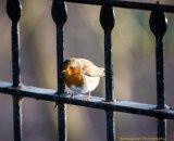 Robin's Gate