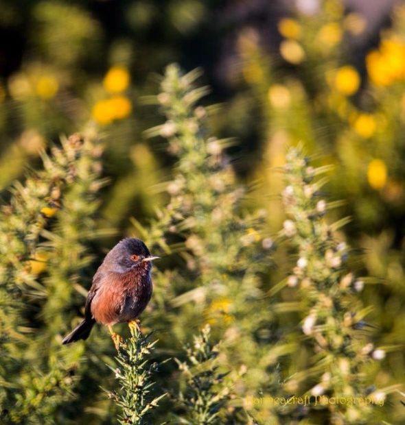 Winter Warbler 3